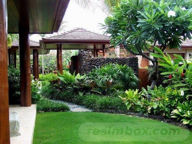tropical garden ideas-37154765661934665