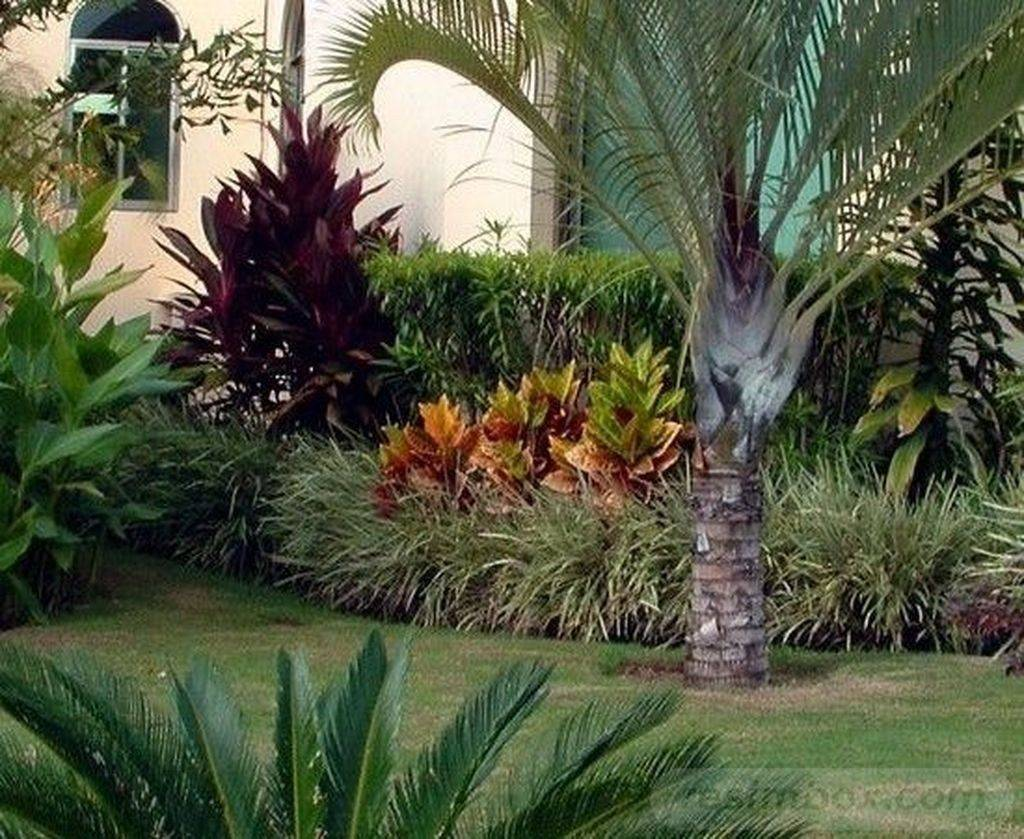 tropical garden ideas-174936766762540841