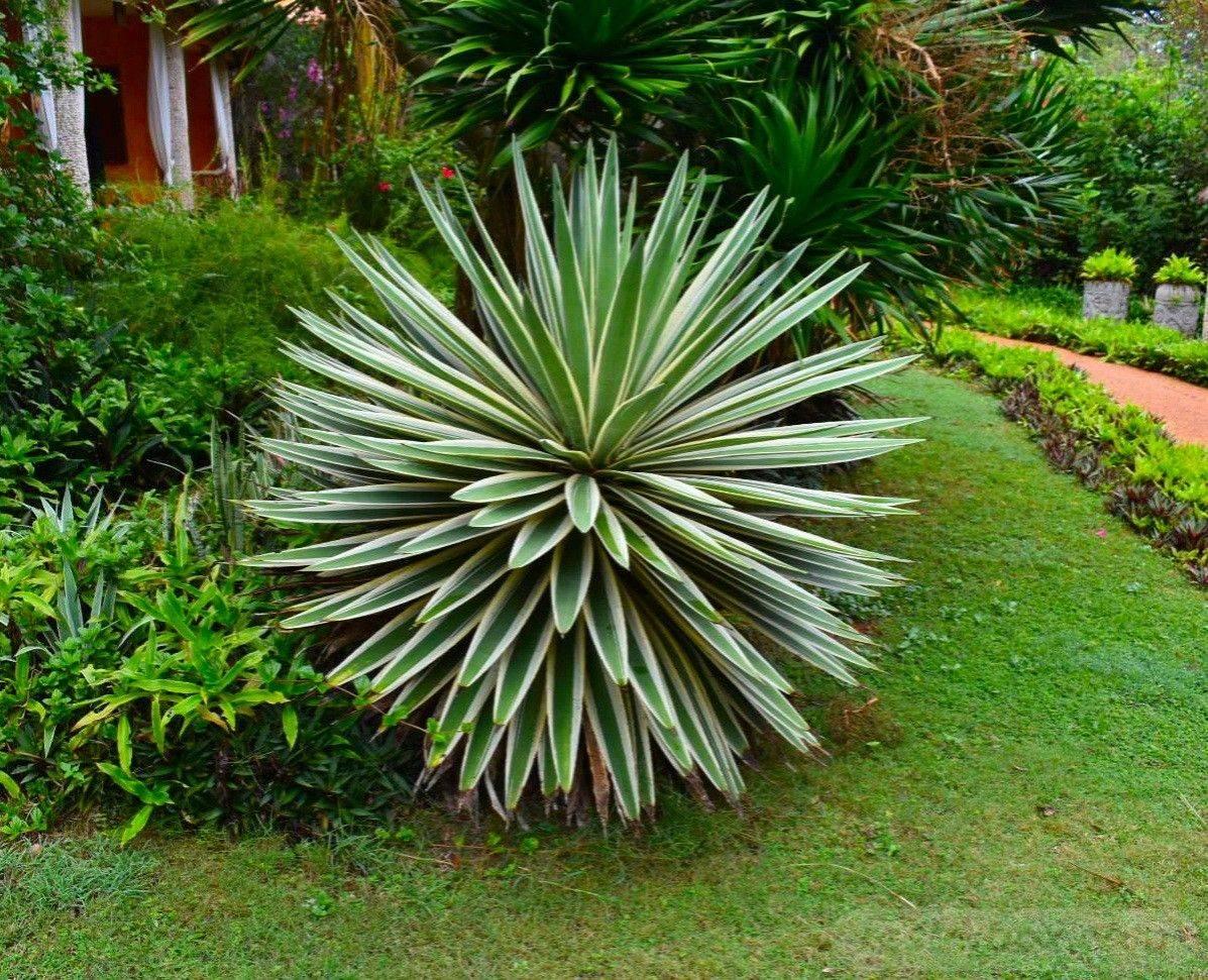 tropical garden ideas-AUBDFhC8MxROs4Pg4nJtmPesSusfYsMTXiVBZdImmK0DmI1dWVA7zMI