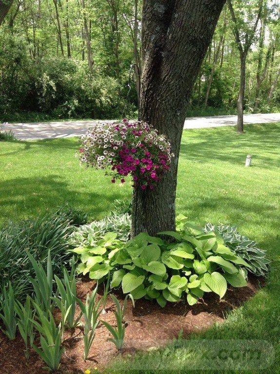 tropical garden ideas-523050944223100616
