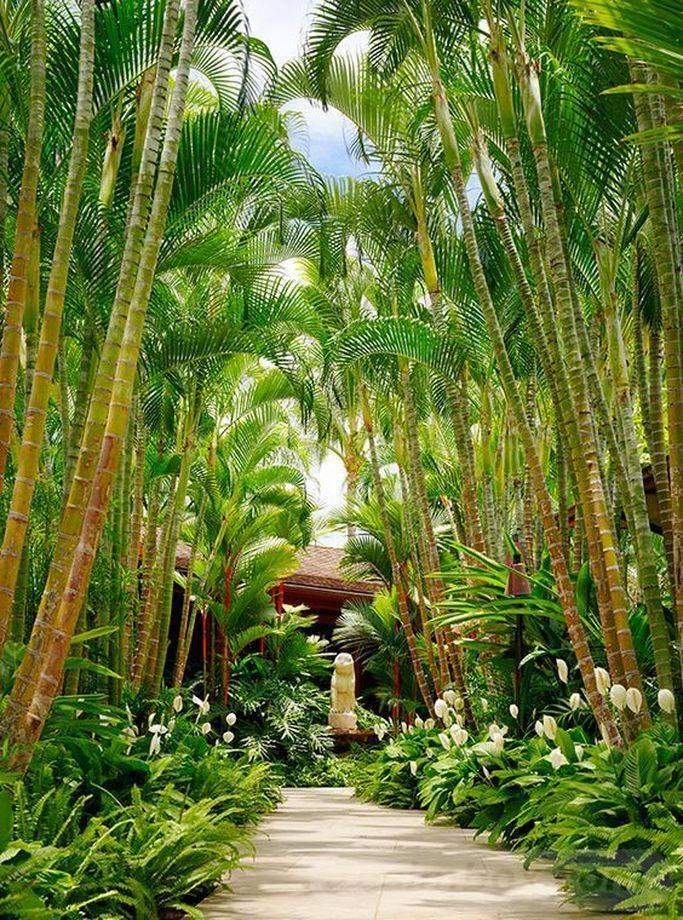 tropical garden ideas-449023025347414018