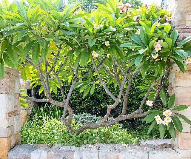 tropical garden ideas-373235887866221422