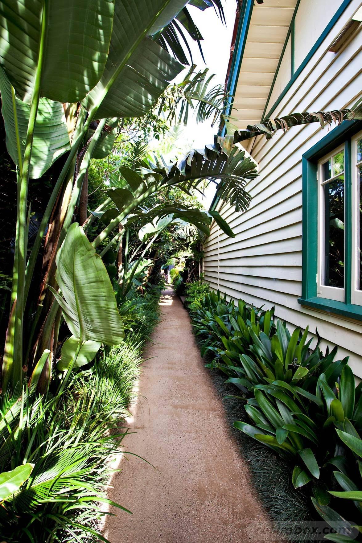 tropical garden ideas-486388828507135594