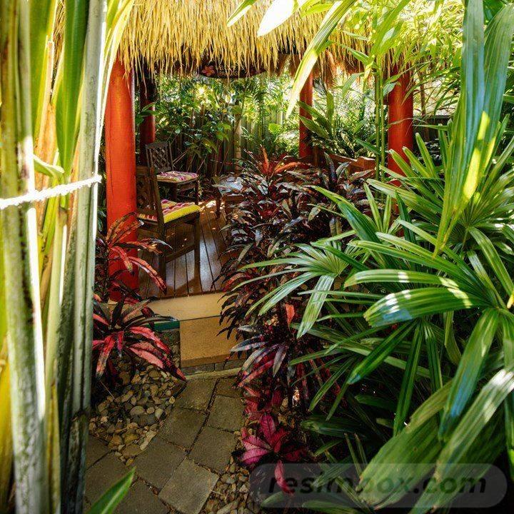 tropical garden ideas-208221182758950733