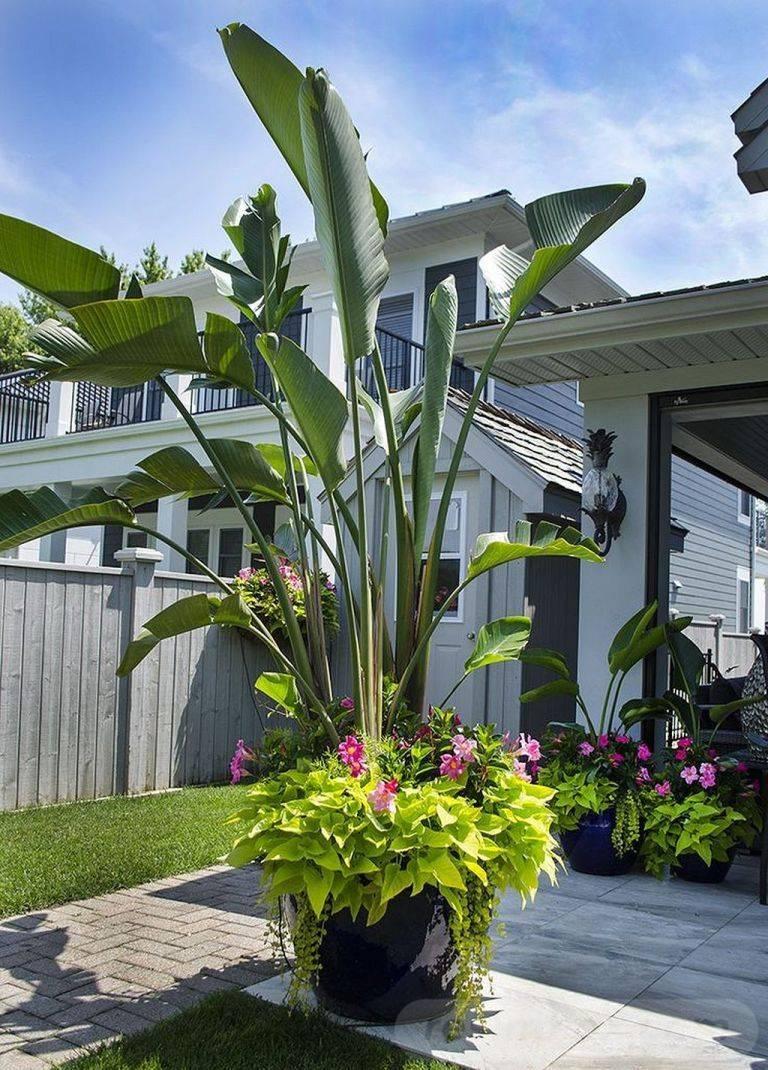 tropical garden ideas-244883298475133798