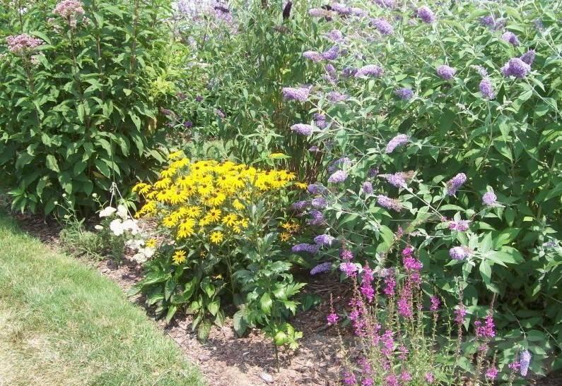 tropical garden ideas-712061391067807801