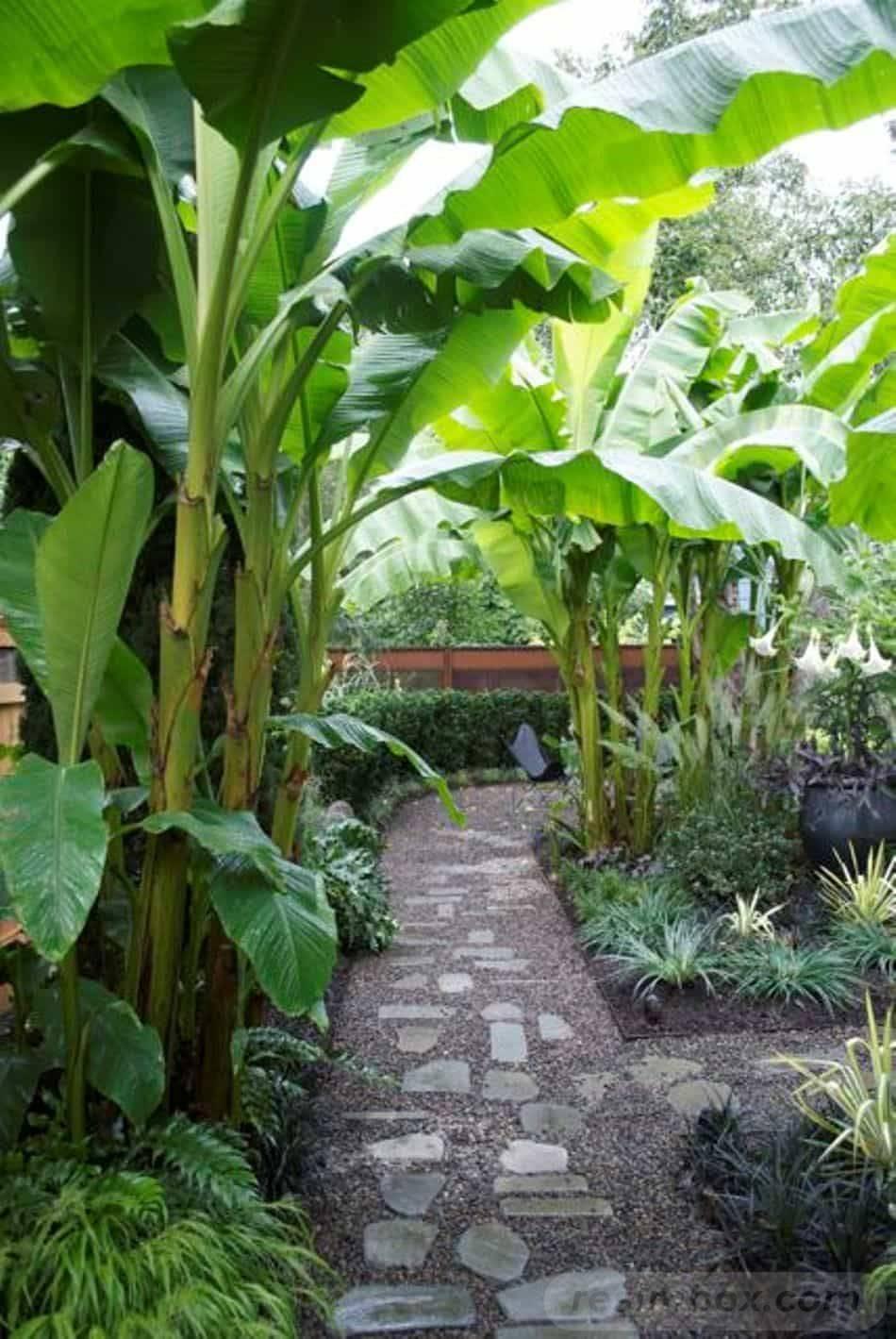 tropical garden ideas-492229434273107358