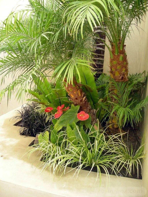 tropical garden ideas-120682465003594200