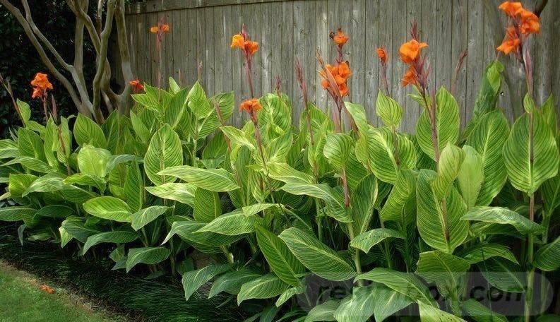 tropical garden ideas-174233079320736472