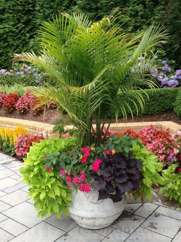 tropical garden ideas-419045940326266889