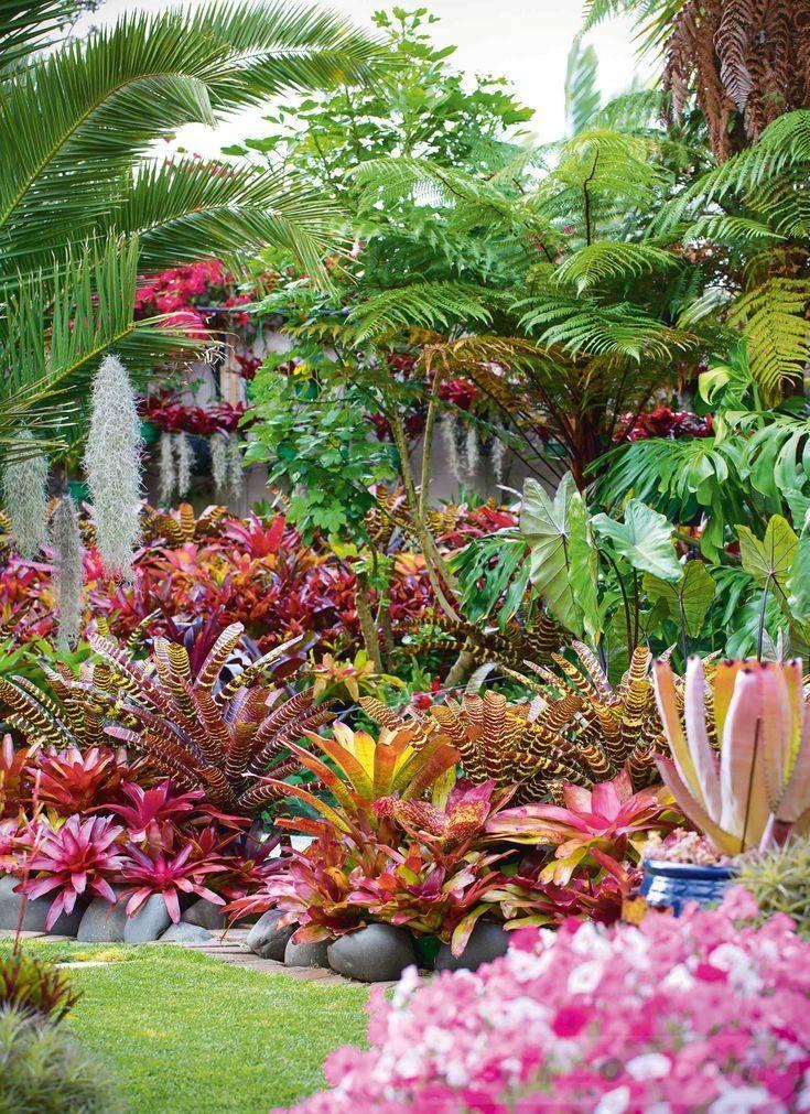 tropical garden ideas-439382507396955388