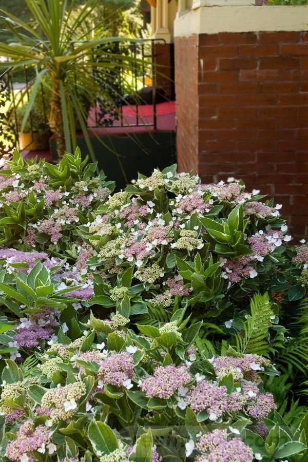 tropical garden ideas-837317755702167716