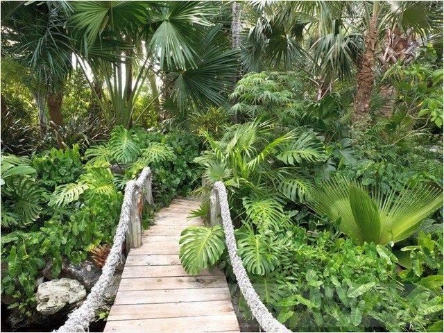 tropical garden ideas-426434658465606140