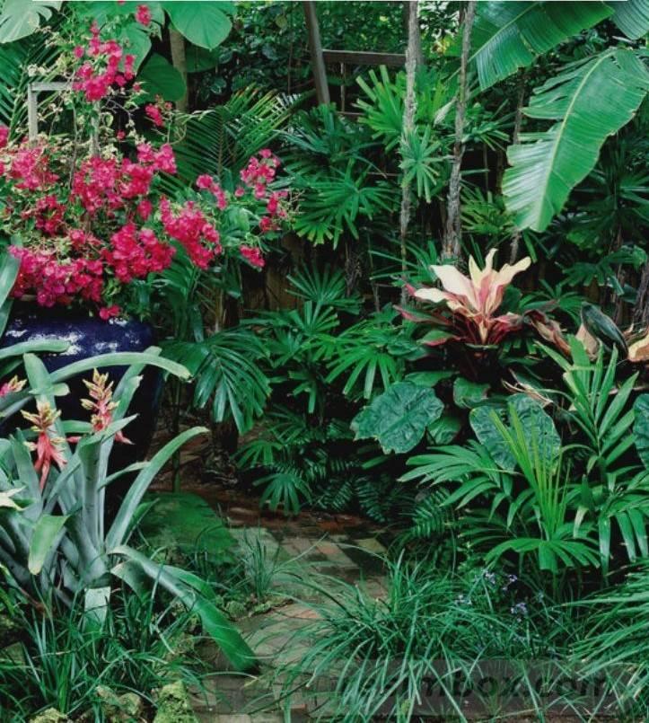 tropical garden ideas-104075441376717761