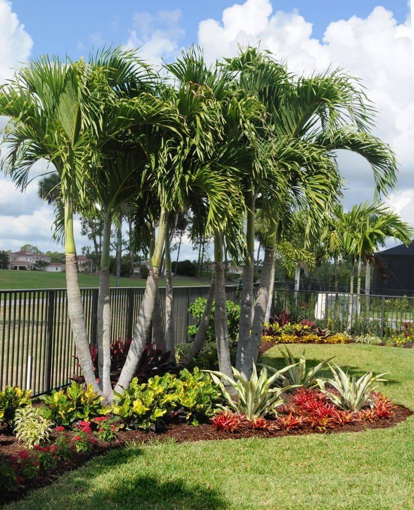 tropical garden ideas-348888302380366617