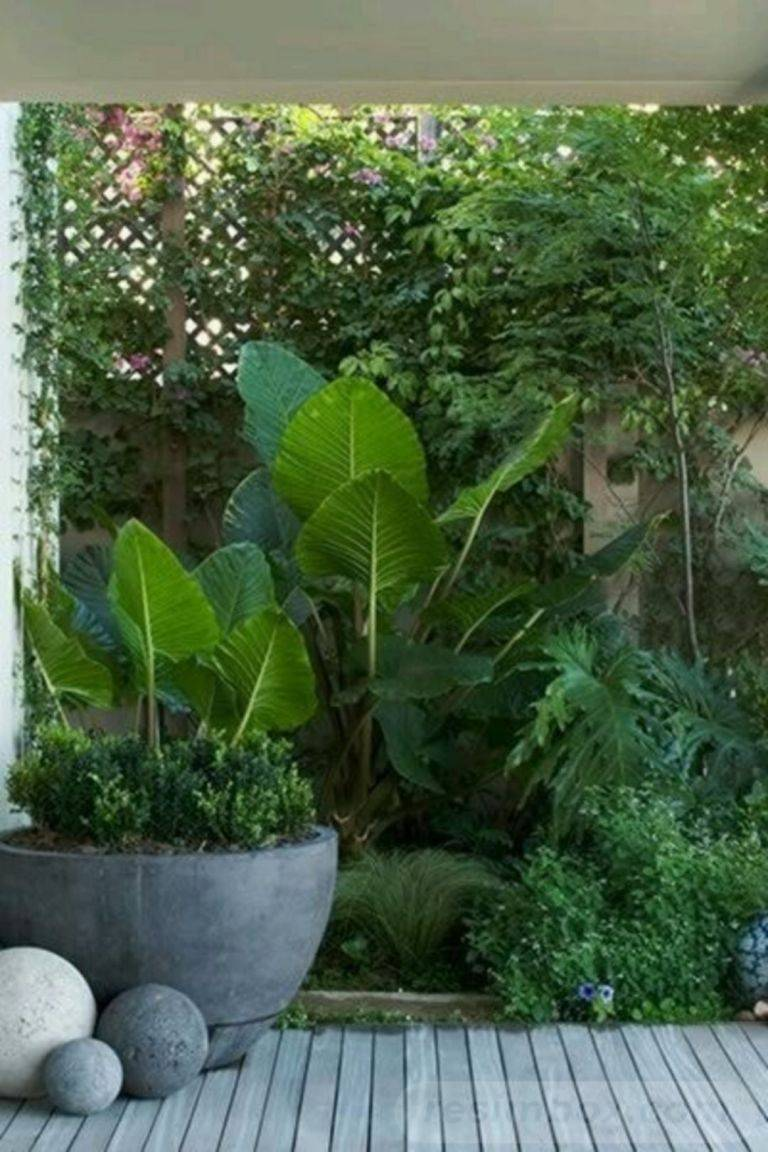 tropical garden ideas-365143482289101104