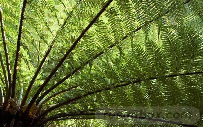 tropical garden ideas-407153622562651636