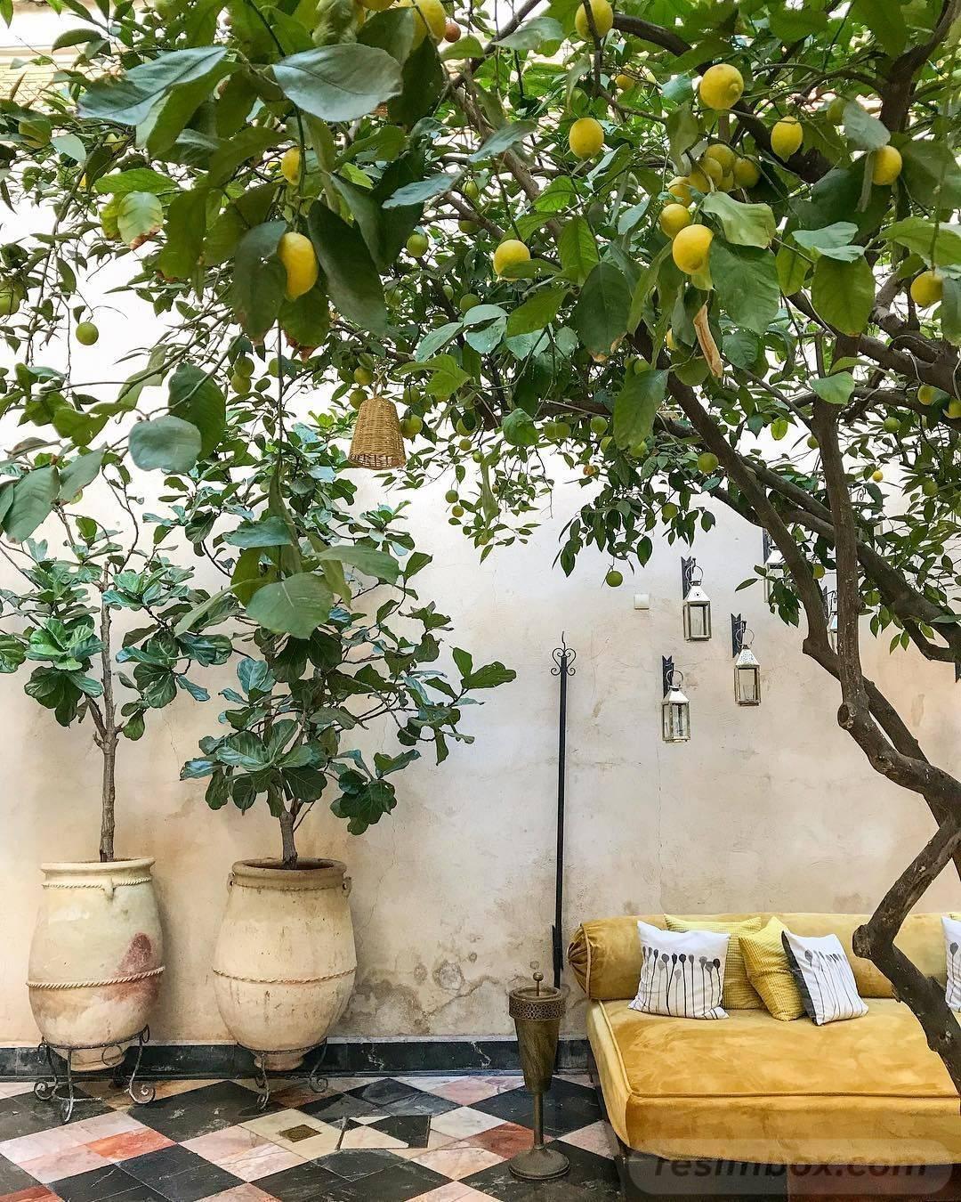 tropical garden ideas-246149935870373764