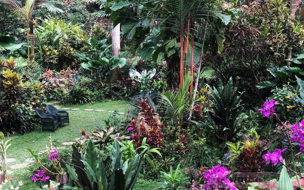 tropical garden ideas-485544403576190637