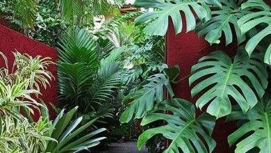 21 Coolest Totally Tropical: What Happens To An Exotic Garden İn The Uk When The Cold Weather Arrives?