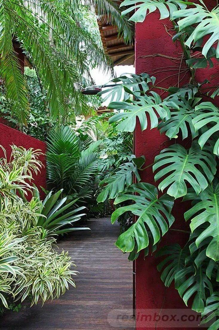 tropical garden ideas-109775309655385274