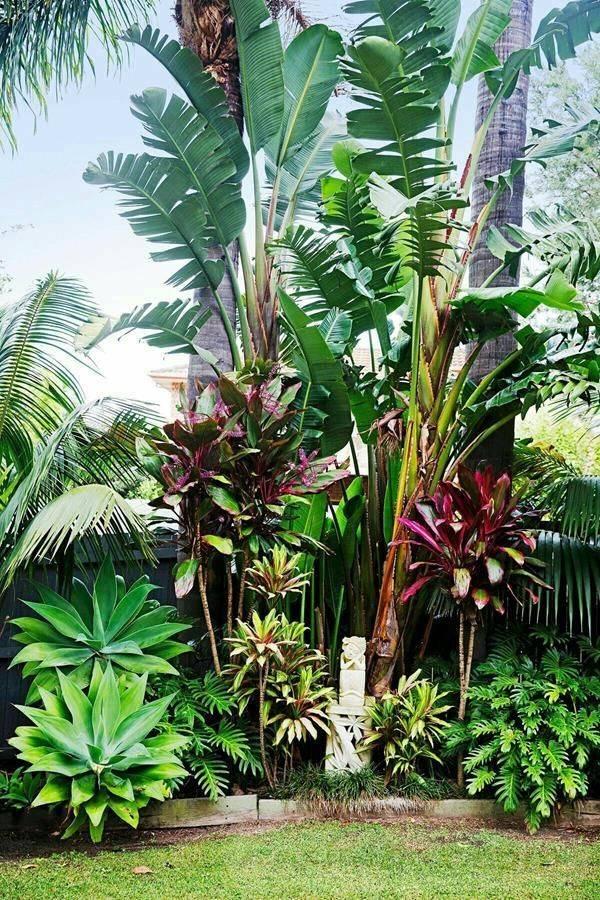 tropical garden ideas-631348441494807082