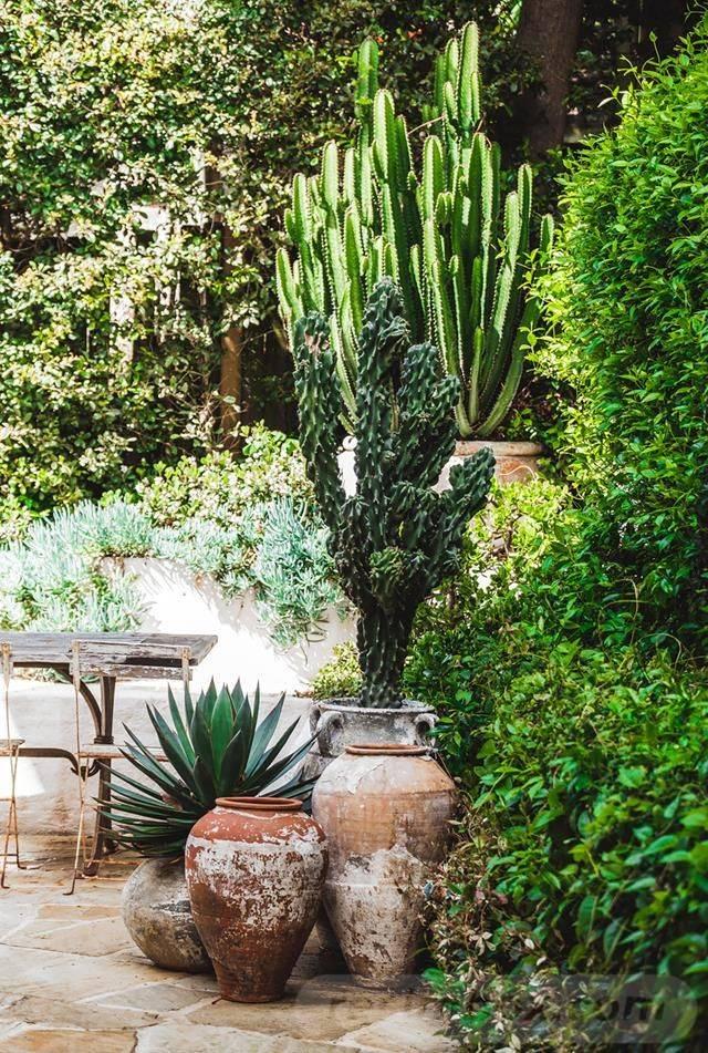 tropical garden ideas-641903753118598784