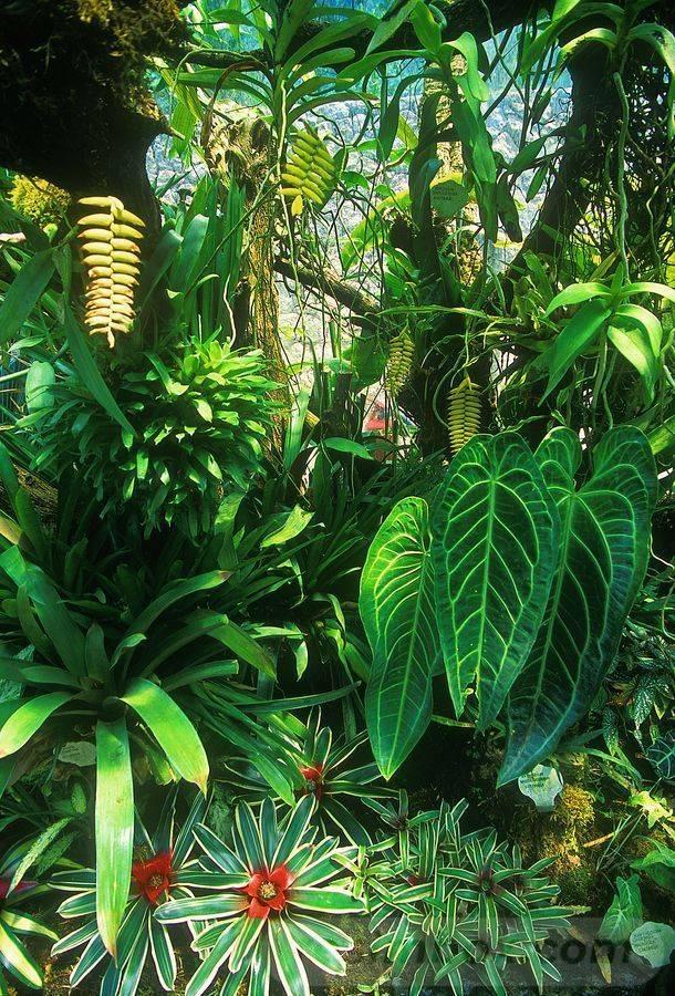 tropical garden ideas-420312577721653533