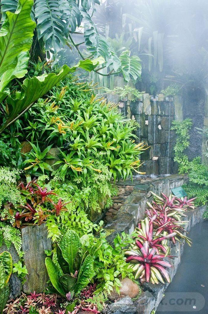 tropical garden ideas-733664595528177039