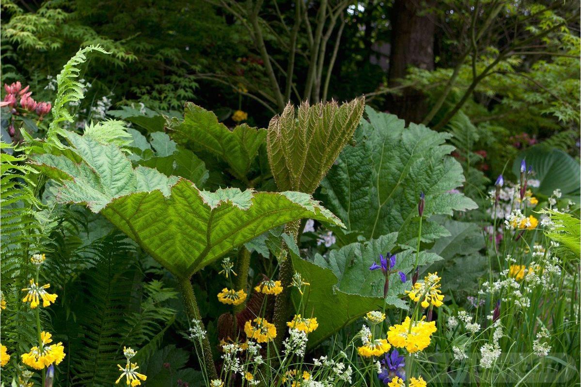 tropical garden ideas-249809110568050658