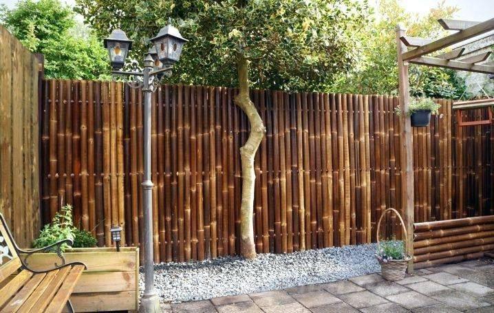 tropical garden ideas-484629609900459584