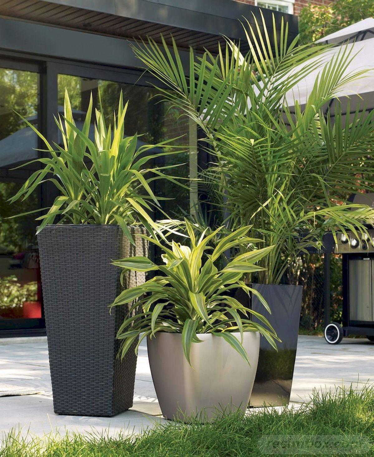 tropical garden ideas-692498880180170808
