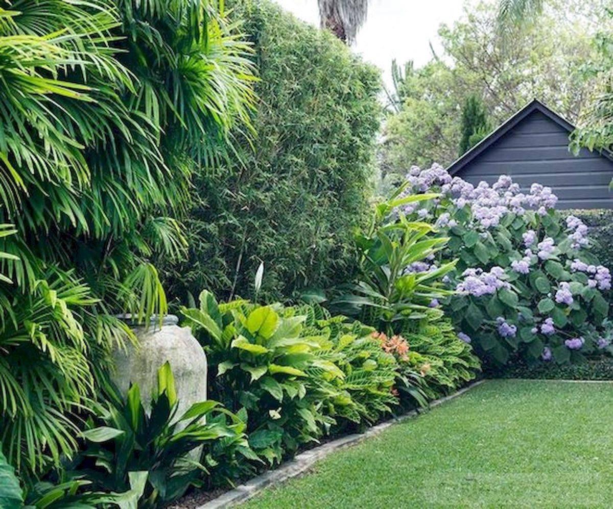 tropical garden ideas-742460688550096026