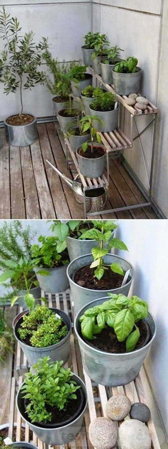 tropical garden ideas-604326843727495116