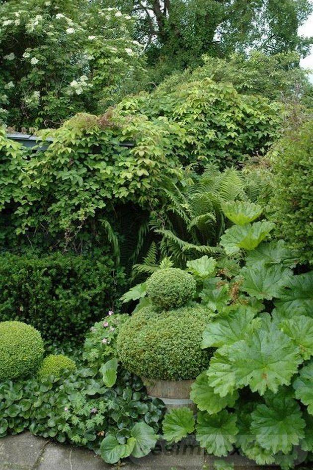 tropical garden ideas-229754018477496598