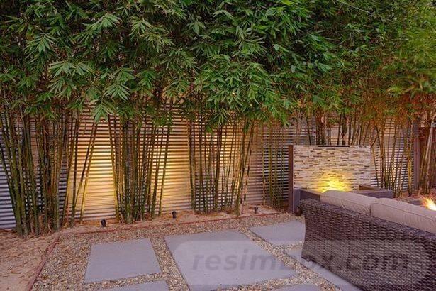 tropical garden ideas-183732859784955606