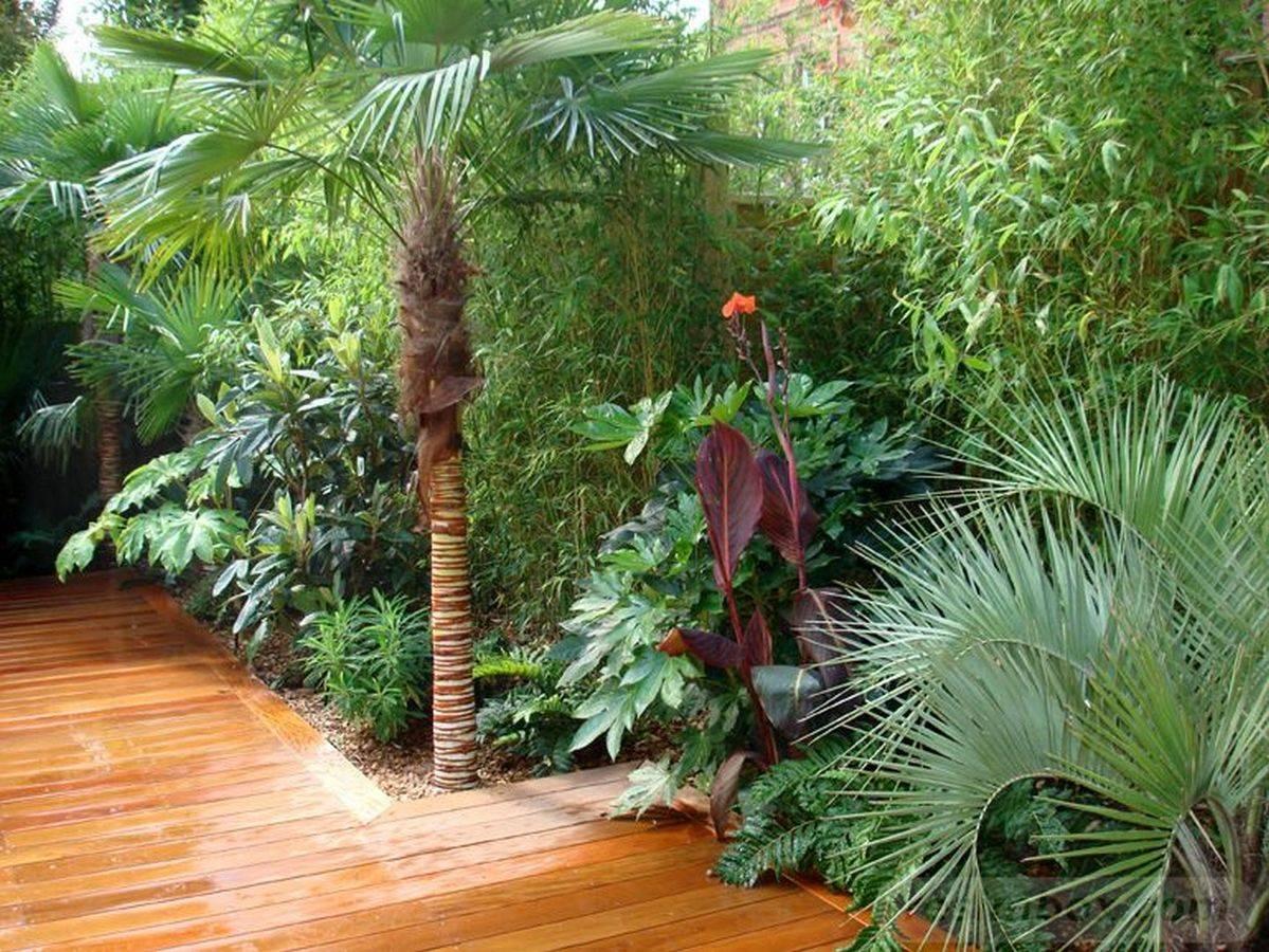 tropical garden ideas-812759063980436740
