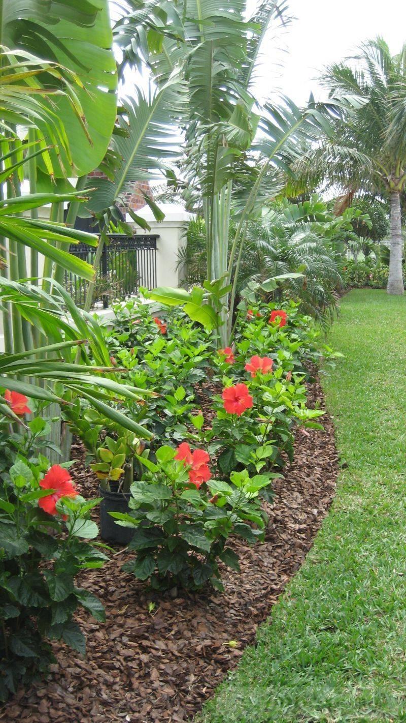 tropical garden ideas-473159504601722609