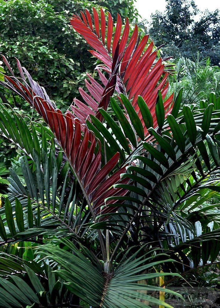 tropical garden ideas-398287160795844573