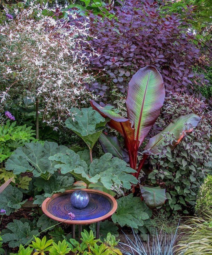 tropical garden ideas-549228117057375167