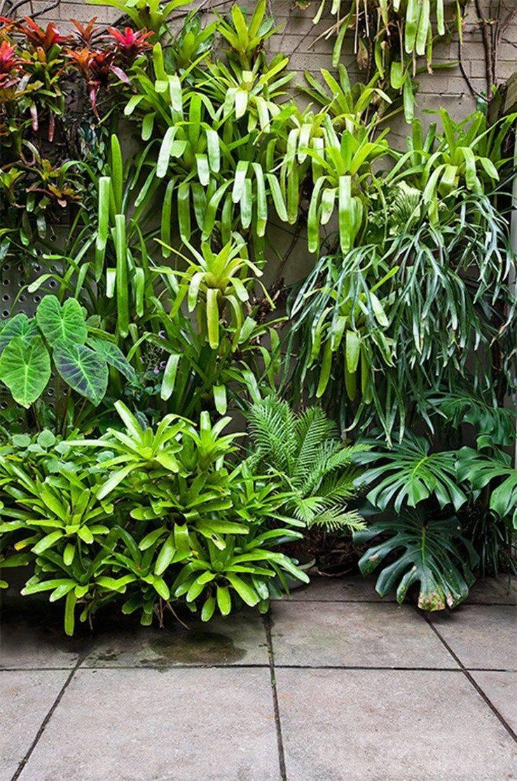 tropical garden ideas-316166836338738615
