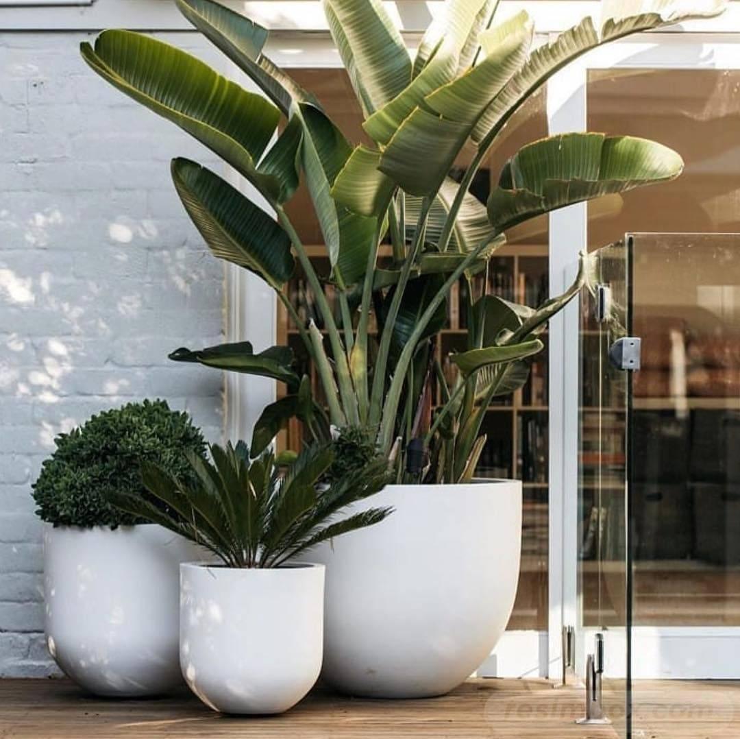 tropical garden ideas-89509111331872347