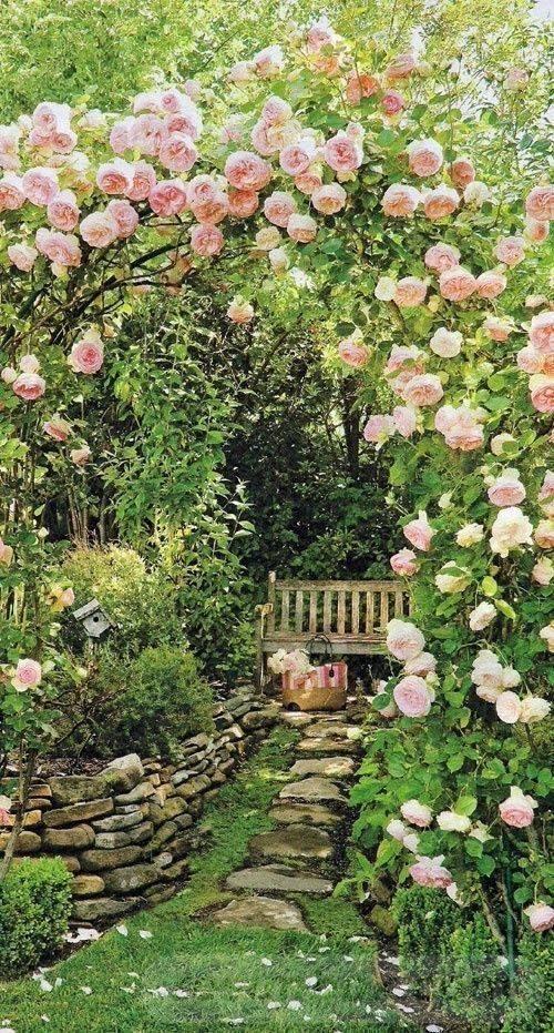 tropical garden ideas-391672498844343633