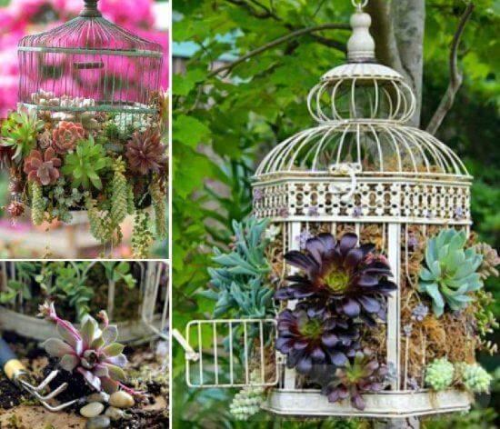 tropical garden ideas-382454193354662706