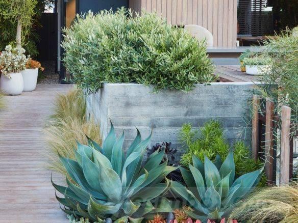 tropical garden ideas-71846556542247986