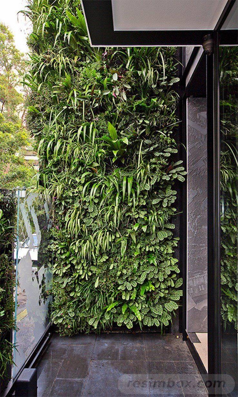 tropical garden ideas-327777679129986246