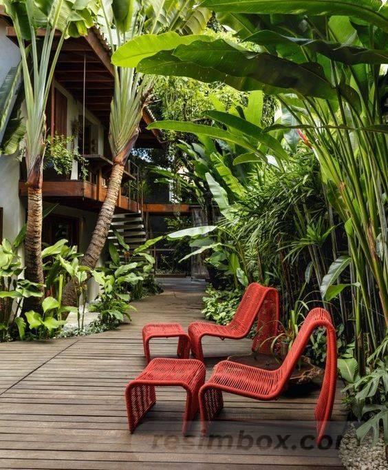 tropical garden ideas-508414245434004929