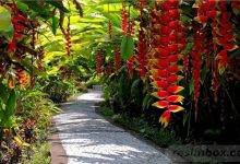 25 Perfect Tropical Garden Design Ideas - Your Staycation Oasis – Easy To Grow Bulbs