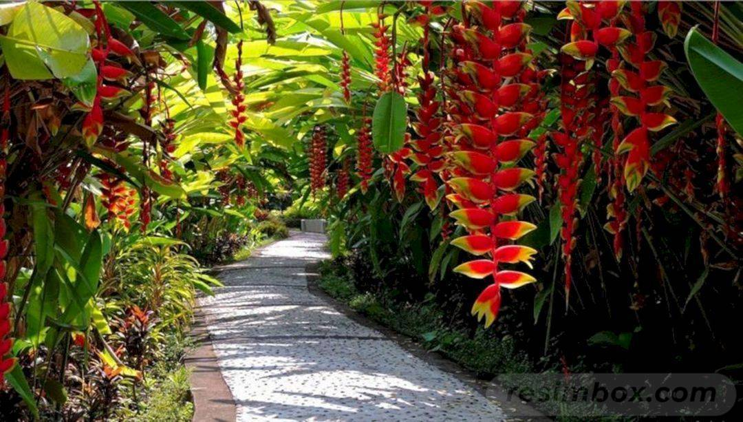 25 Perfect Tropical Garden Design Ideas Your Staycation Oasis Easy To Grow Bulbs
