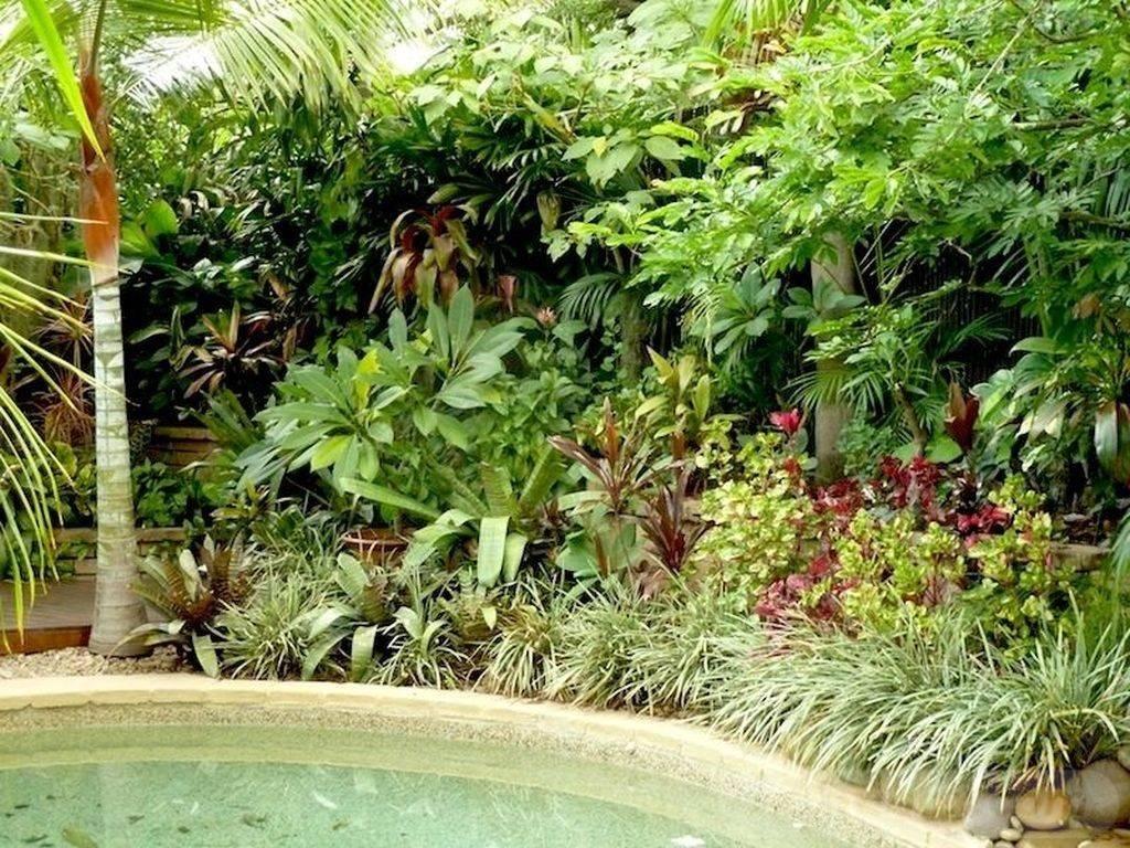 tropical garden ideas-174936766762540838